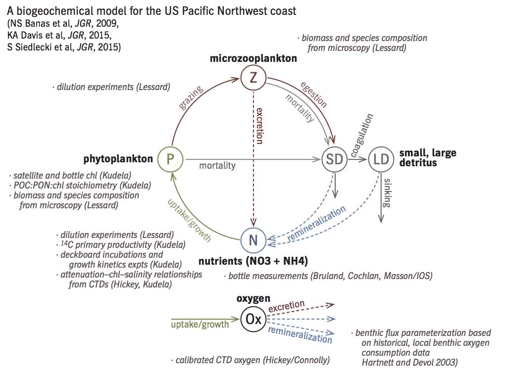 new npzd diagram